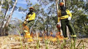New burn begins at Olinda Grove as fuel reduction program ramps up ...