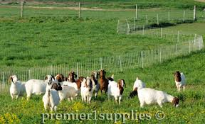 Electric Fence And Netting For Goats Premier1supplies