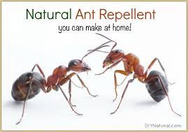natural ant repellent spray a simple