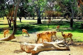 8 انشطة سياحية يمكن القيام بها في حديقة سفاري بالي