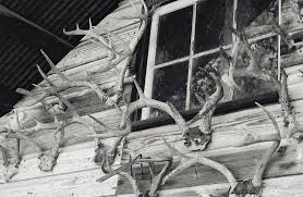 Hunters Deer Horns On Shed Photograph by Floyd Smith