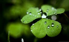 best 31 four leaf clover background hd