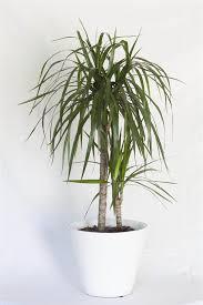 20 plantas de interior resistentes
