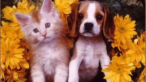 cute puppy kitten hd desktop wallpaper