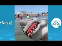 funny shark puppet insram videos