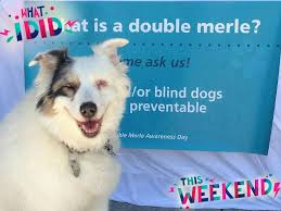 Double Merle Awareness Day (2020)