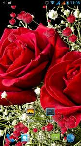 3d rose live wallpaper 62b44kf