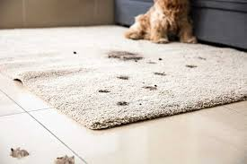 how to clean carpet sns 11 types
