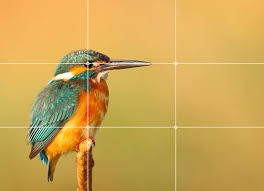 Understanding the Rule of Thirds in Photography (With Examples)