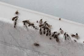 View Tiny Ants With Wings In House PNG