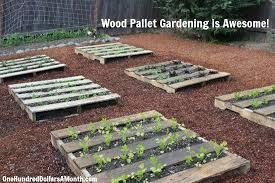 wood pallet garden spinach lettuce