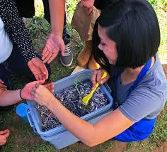 Worm Bins for the Ada Harris School Garden | Solana Center for ...