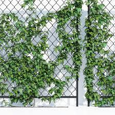 Wall Ivy 3d Model Download 3d Model Wall Ivy 25459 3dbaza Com