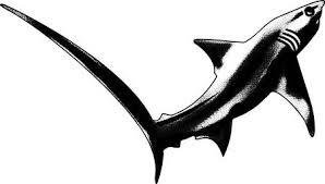 Haai Vectoren Illustraties En Clipart 123rf