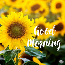 good morning pics a new day starts