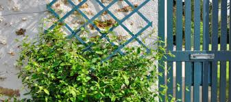 container gardening with climbing