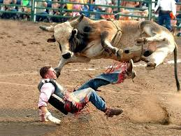 bull riding wallpapers and backgrounds