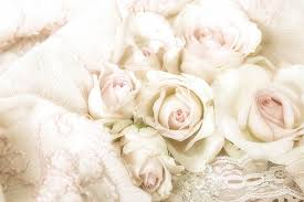 hd wallpaper photo of white roses on