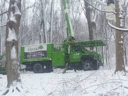 Winter is a Treacherous Season for Trees, Giroud Tree and Lawn Provides Tree  Service Tips to Help Philadelphia Homeowners Protect Trees From Damage