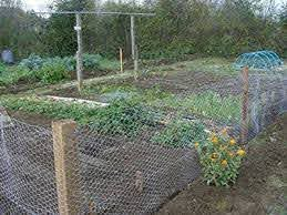 Chicken Wire Mesh Used In Garden As Fence Raised Cfguide Forum