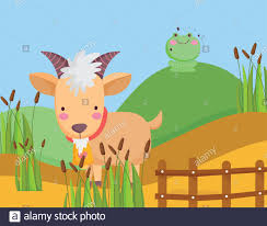 Goat And Frog In Hill Wooden Fence Plants Farm Animal Cartoon Vector Illustration Stock Vector Image Art Alamy