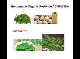 homemade organic pesticide for your