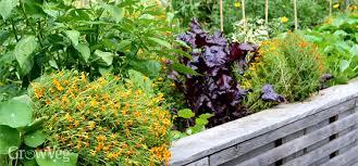 using square foot gardening to grow