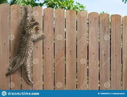Funny Kitten Hanging On Fence Stock Image Image Of Cute Desk 160689943