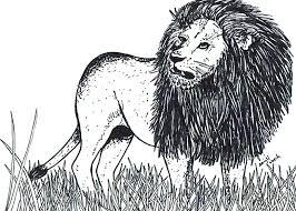 Tekening Van Een Leeuw