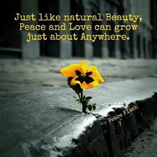 beautiful nature quotes home facebook