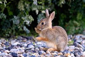 How To Keep Rabbits Out Of Garden 5 Best Rabbit Repellents