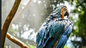 blue macaw 4k hd birds 4k wallpapers