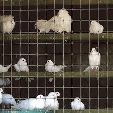 Poultry Fence Agriculture Breeding Tenax