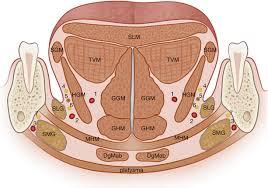floor of mouth springerlink
