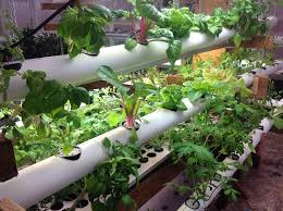 pvc pipe garden ideas what to do with