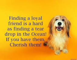 best friendship quotes and friendship sayings finding a loyal