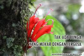 tak ada bunga yang mekar dengan tergesa ardyarifiantara