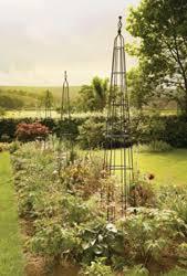 iron obelisks and rose obelisks plant