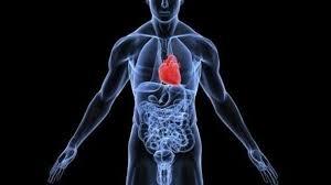 Por qué el corazón se sitúa a la izquierda del cuerpo? - Información