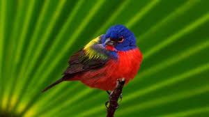 صور عصافير اروع خفليات طيور الزينه حبيبي