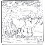 Kleurplaten Paarden Kleurplaten Dieren