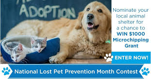July Is National Lost Pet Prevention Month