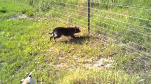 Training Problems With Electric Dog Fence Guide 2020