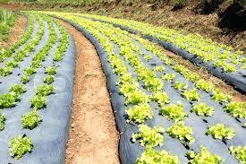 vegetable garden weed control fabric