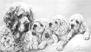 clumber spaniel fine art dog print by