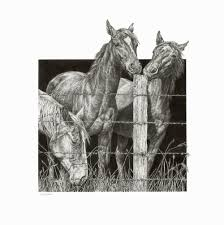 Horse And Figurative Pencil Drawings By Jeanne Cardana I Artsy Shark