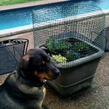 Keep Dogs From Digging Up Potted Plants Temporary Fencing Found In The Building Section At Home Depot Ca Dog Friendly Backyard Digging Dogs Backyard Fences