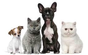 "Картинки по запросу ""гуманне ставлення до тварин"""