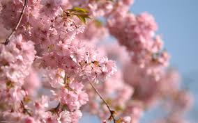 الفروع أزهار أوراق الربيع الرقة الحصول على خلفيات سطح المكتب Hd