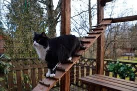 The 25 Best Outdoor Cat Enclosures Of 2020 Cat Life Today